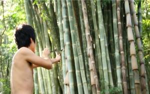 bambu_still
